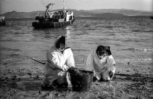 Prestige Oil Spill Volunteers engaged in clean-up. 'Prestige' oil spill. Cies Islands Nature Reserve, Galicia, Spain. December 2002.
