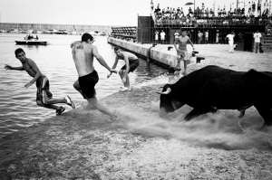 Bous al Mar Local youths attempt to make a bull chase them into the sea. Javea, Spain. August 2007.