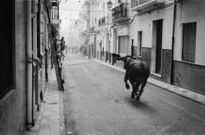 Bous al Carrer A bull clears the streets during an early morning run. Quatretonda, Valencia, Spain. June 2008.