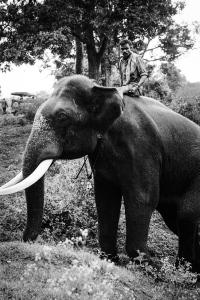 Mudumalai Wildlife Sactuary Mudumalai Wildlife Sactuary, India 2012