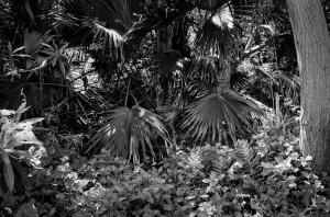 Bermuda Flora Bermuda Flora